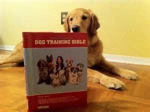 golden retrieer with book 2