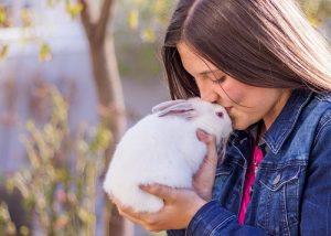 pet rabbits are fun pets