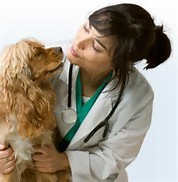 vet with spaniel
