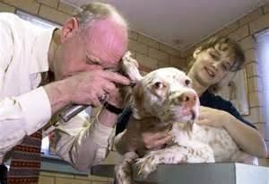 dog, owner, vet