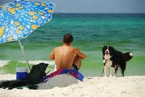 Travel with dogs to beach