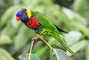The Lovable Lory, colorful and playful
