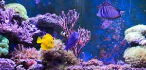 aquarium health benefits