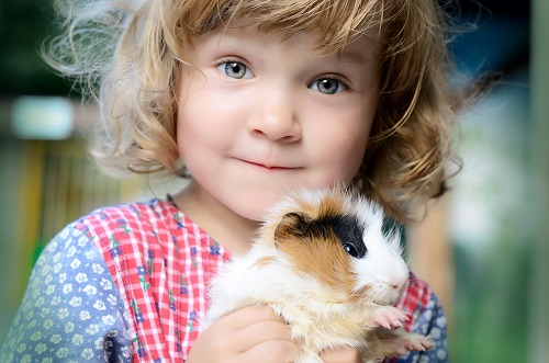 Cavy Pet: Captivating Cavy Characters
